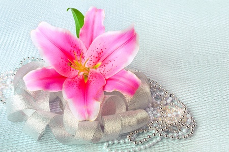 Beautiful pink lily flower on the silver textile  background photo