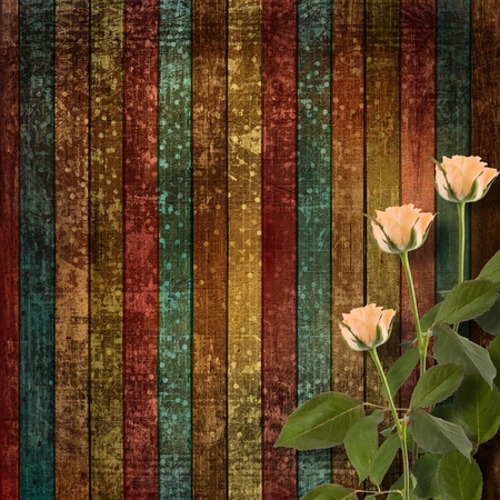 Weathered wooden planks with cream beautiful roses photo