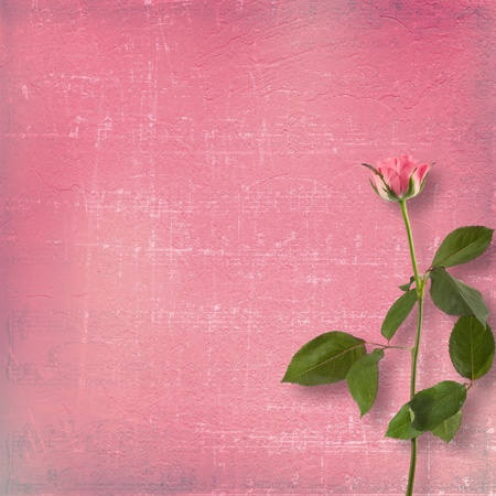 Grunge background for congratulation with beautiful rose Stock Photo - 9485145