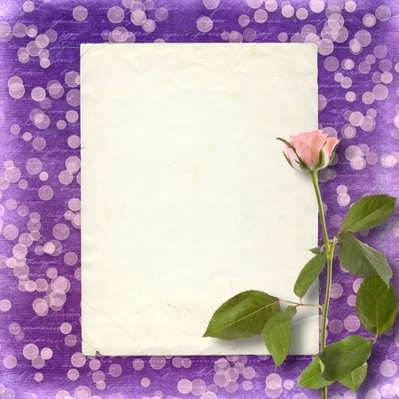 Card for invitation or congratulation with beautiful rose on the abstract blur boke background photo