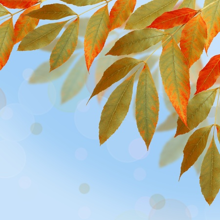 Bright autumn leaves on the abstract background with bokeh Stock Photo - 10943997