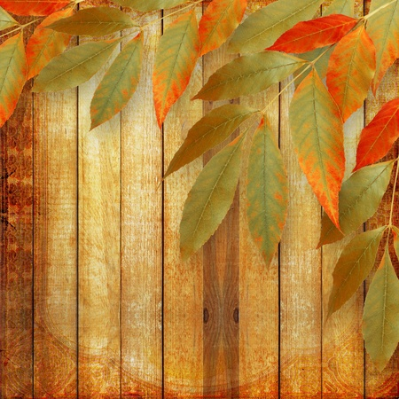 Bright autumn leaves on the wooden background photo