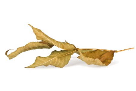 Dried autumn leaves isolated on white background photo
