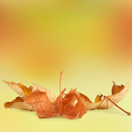Bright autumn leaves on the abstract background with bokeh photo