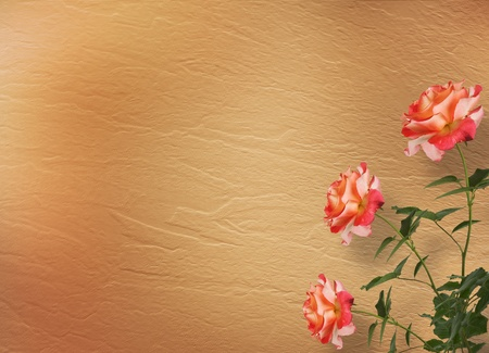 garden wall: Grunge background for congratulation with beautiful rose