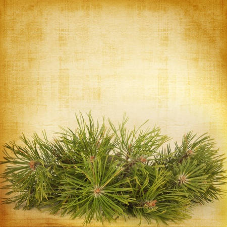 spangle: Christmas greeting vintage card with branches of spruce