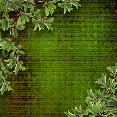 deciduous: Deciduous tree branch on the background of abstract green wall