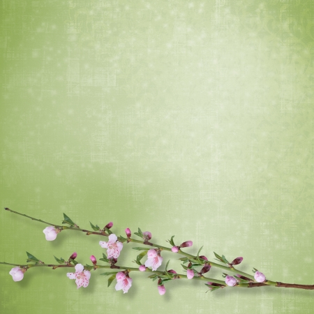 Beautiful abstract background with branch of Sakura  photo