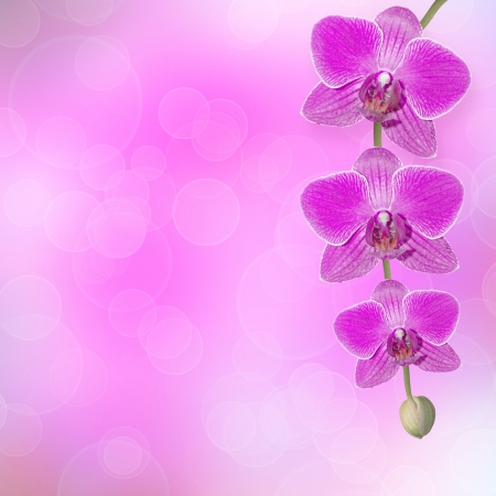 Beautiful pink orchid branch on an abstract background of a delicate photo