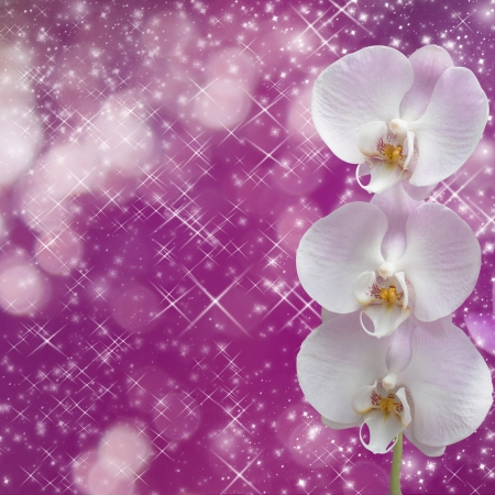 Beautiful pink orchid branch on an abstract background of a delicate