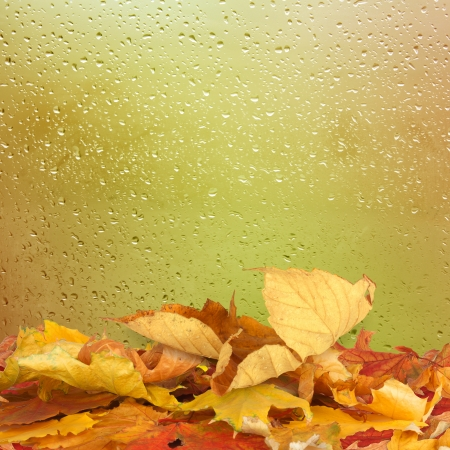 drizzling rain: Dried autumn leaves lying on the background of the rainy window