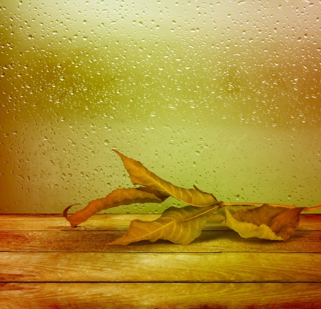 Dried autumn leaves lying on the background of the rainy window Stock Photo - 21974397