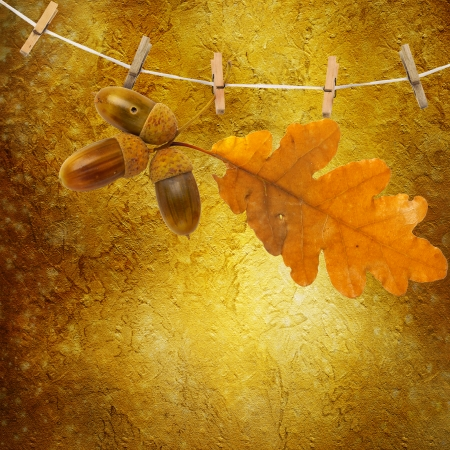 Oak branch with acorns hanging on clothesline on abstract  photo