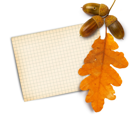 Old grunge paper with autumn oak leaves and acorns on the  white background isolated photo