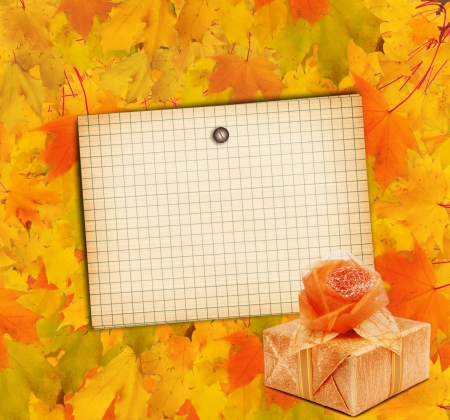 Autumn maple branch with gift box on the abstract background photo