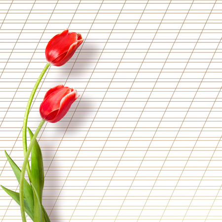 Bouquet of beautiful red tulips with greeting on paper white background photo