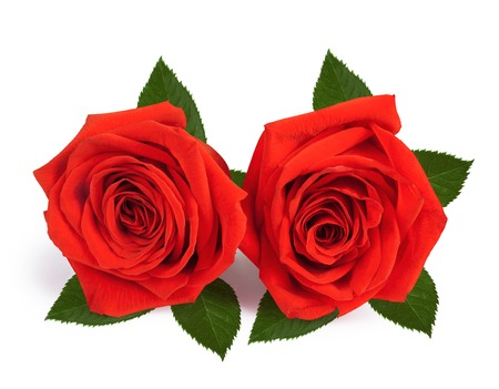 A couple gift roses on valentine day isolated on white background photo