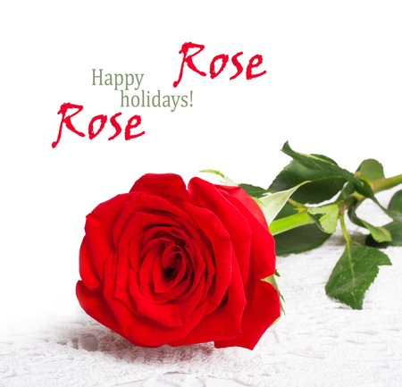 Red rose with green leaves and isolated on white background photo