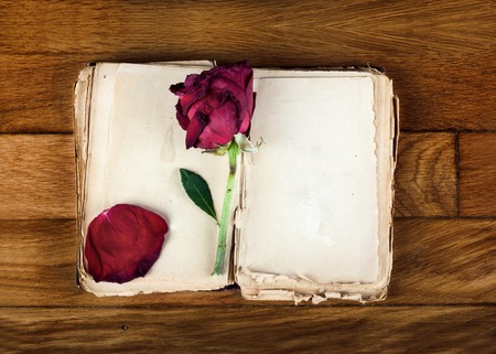 Open old book with blank pages for text and dry rose on vintage wooden table photo