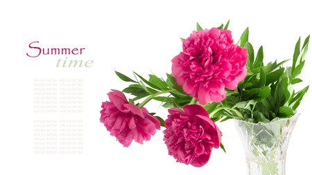 Beautiful bouquet of pink peonies on a white background isolated photo