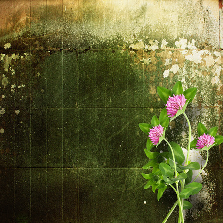 Old shabby cement wall with bouquet of delicate pink clover photo