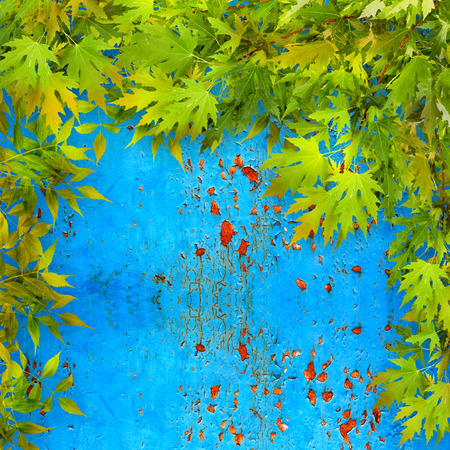 Bright green foliage on background of blue rusty iron wall photo