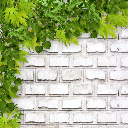 Bright green foliage on background of a white brick wall photo