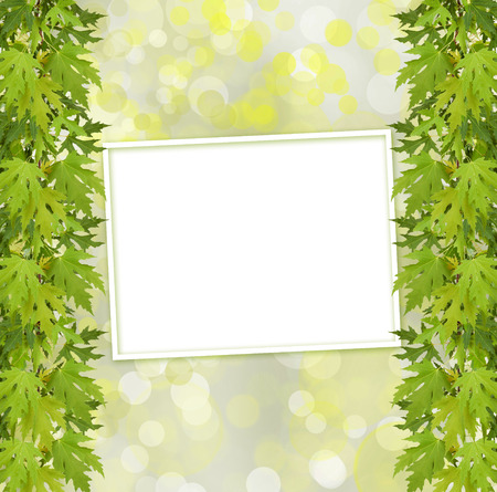 Green branch of  tree and paper frame on abstract background with bokeh effect photo