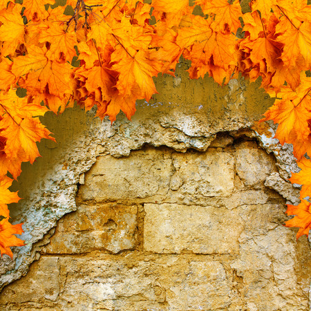 Bright orange autumn leaves on the background of an old brick wall photo