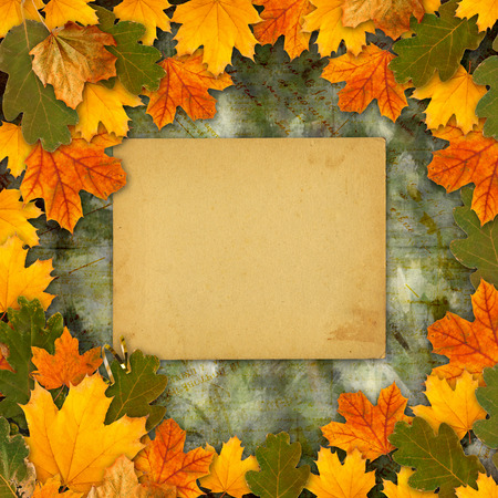 Bright multicolored autumn leaves on the abstract beautiful background photo