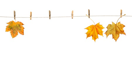 Maple leaves on clothespins with the word autumn, isolated on white background