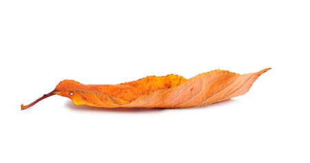Autumn  branch with leaves with shadow isolated on white background