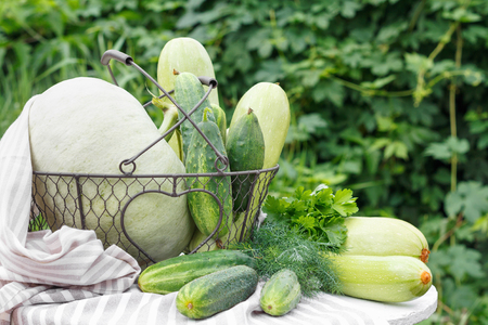 Harvest of ripe cucumber squash and pumpkin in  metal basket on  wooden table in  background of garden