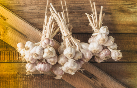 Bundles of fresh garlic dried on vintage wooden wall.  Copy space. 스톡 콘텐츠