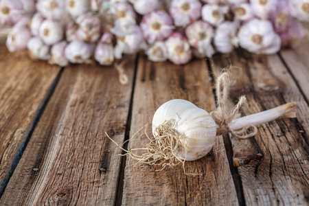 Bundles of fresh garlic dried on vintage wooden table. Copy space.