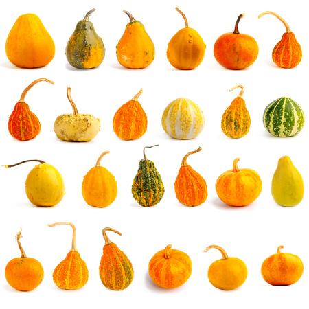 Satz Kürbisse auf lokalisiertem weißem Hintergrund. Frisch, orange und dekorativ Standard-Bild