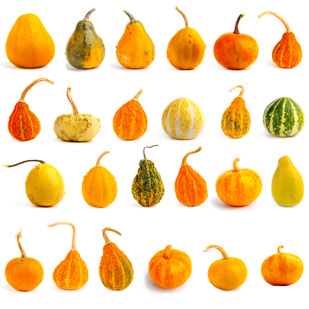Set di zucche su sfondo bianco isolato. Fresco, arancione e decorativo Archivio Fotografico