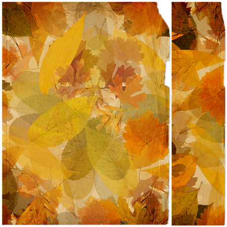 Colorful autumn foliage in chaotic order on an abstract background with vintage paper photo frame. Top View Flat Lay Group Objects