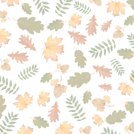 Colorful autumnal branch of  tree on white isolated background