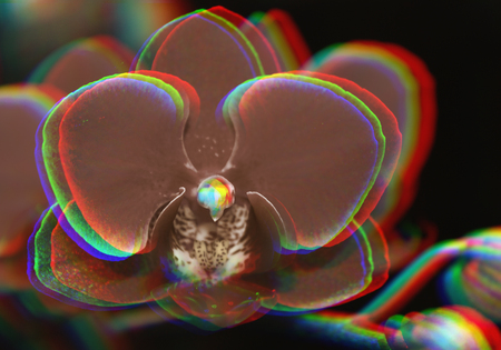 Beautiful  orchid branch on abstract blurred background with Glitch effect
