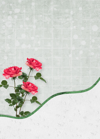 Holiday card with beautiful roses and bow for a photo for  invitation or congratulation