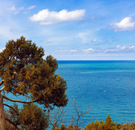 Evergreen juniperus high  is  coniferous plant of the genus Juniper cypress family on rocks in grove on the coast of  blue sea on  background of azure sky 免版税图像