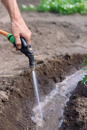 Man farmer watering tomatos  and pepper seedlings in the garden outdoors. Hands close up