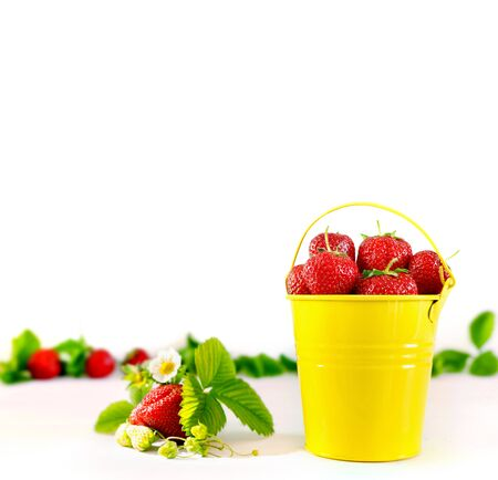 Juicy ripe tasty strawberries in  yellow metal bucket on white wooden table. Summer harvest Stock Photo