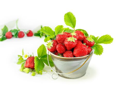Juicy ripe tasty strawberries in  metal bucket on white wooden table. Summer harvest Stock Photo