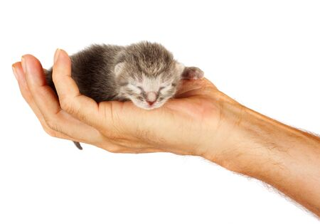 Newborn kitten in arms of man on  white isolated background 스톡 콘텐츠