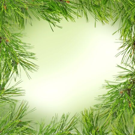 Pine twig on abstract green background with snowflakes for greeting or invitation Stock Photo
