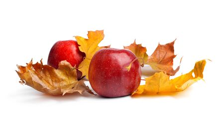 Several ripe juicy red apples with autumn leaves on white isolated background