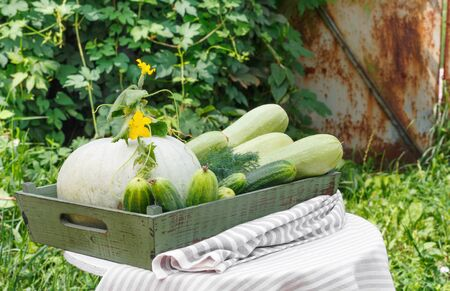 Harvest of ripe cucumber squash and pumpkin in  wooden box on  wooden table in  background of  garden