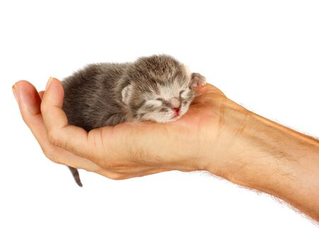 Newborn kitten in arms of man on white isolated background